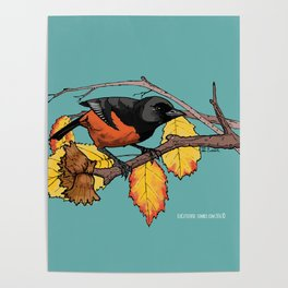 Oriole Poster