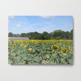 Sunflower Feild Metal Print