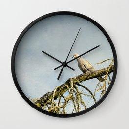 Eurasian Collared Dove Wall Clock