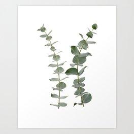 Eucalyptus Branches I Art Print