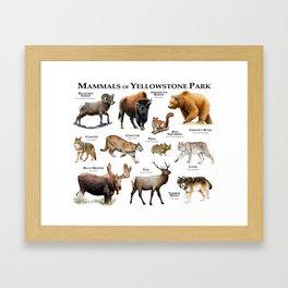 Mammals of Yellowstone Park Framed Art Print