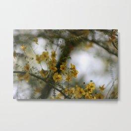 Closeup of Palo Brea Tree In Morning Sun Metal Print