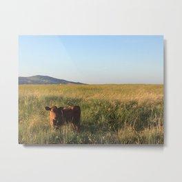 Cow in field Metal Print