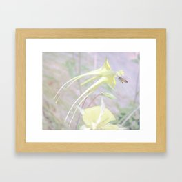 Bee and Columbine Wildflower Art by Murray Bolesta Framed Art Print