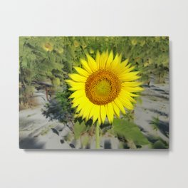 Sunflower King Metal Print