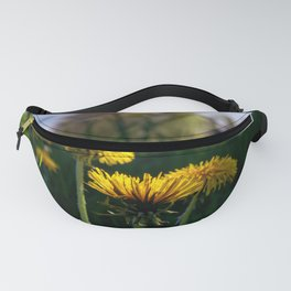 Concept flora : Dandelions in a field Fanny Pack