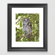 Beauty the Owl Framed Art Print