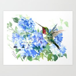 Hydrangea Flowers and Ruby Throat Hummingbird Art Print