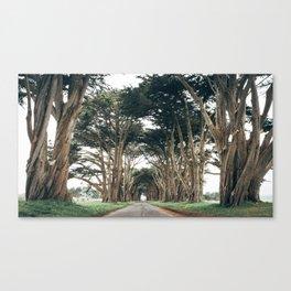 Cypress Tree Tunnel Canvas Print