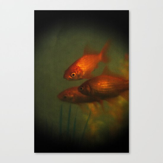 Goldfish In Antiquity  Canvas Print