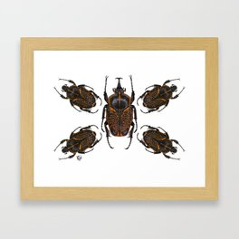 Goliath Flower Beetle Framed Art Print