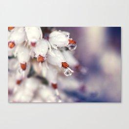 Heather Calluna Flower Canvas Print