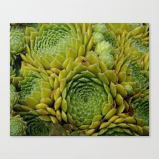 Thinking in Fractals  Canvas Print