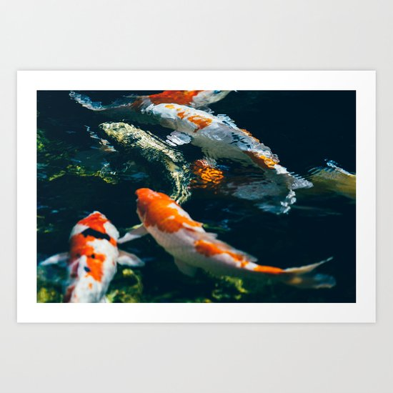 Koi Fish In Water Art Print