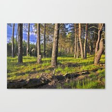 Dreaming Summer Forest Canvas Print