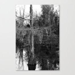 moss and tree Canvas Print