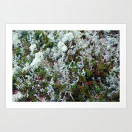 Tundra Lichen and Berries Art Print