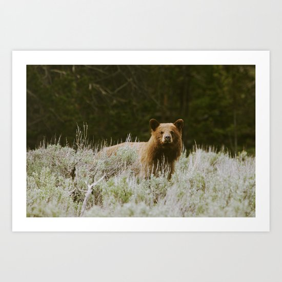 Bush Bear Art Print