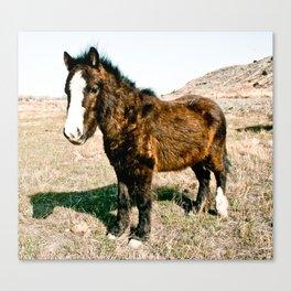 Mini Horse Canvas Print