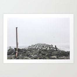 Bird Territory Art Print