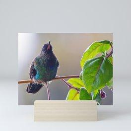 Fiery-throated Hummingbird Mini Art Print