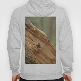 broken tree Hoody