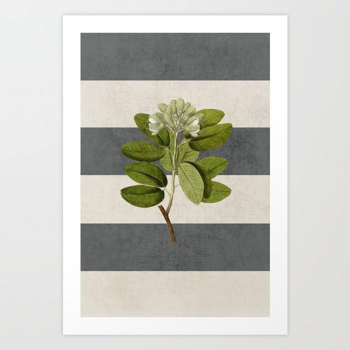 botanical stripes 5 -gray Kunstdrucke
