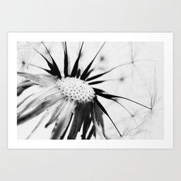 Dandelion BW Art Print