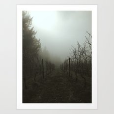 Foggy Morning Vineyard Art Print