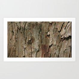 Tree bark Art Print