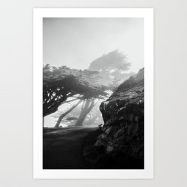 These Cool Trees at Point Reyes Art Print