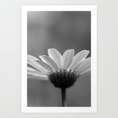 black and white daisy petals Art Print