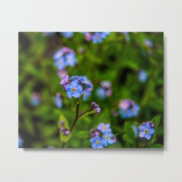 Forget-me-nots In The Rain Metal Print