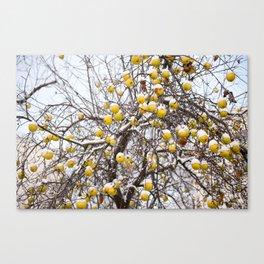 apples sag on tree in snow Canvas Print
