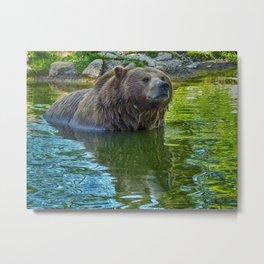Brown bear in water Metal Print