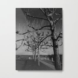 Tree in a row Metal Print