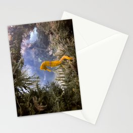 Seahorse Window Stationery Cards