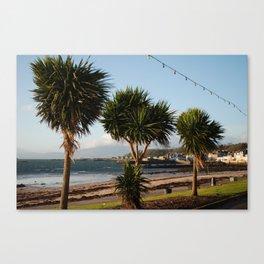 Millport Palms Canvas Print