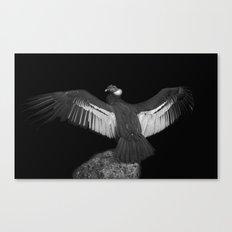 Adrean Condor Canvas Print