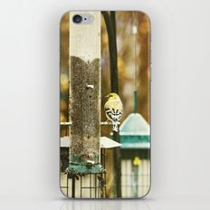 bird at the feeder iPhone & iPod Skin