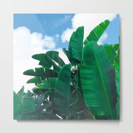 Banana Palm Leaves Tickling the Blue Sky Metal Print