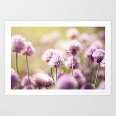 Allium Schoenoprasum Art Print