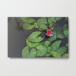Afloat Lily Pad Nature Photograph Metal Print