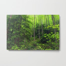 Forest Hill Metal Print