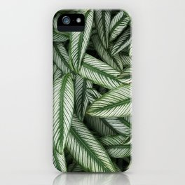 Green Leaves from a Tropical Plant  iPhone Case
