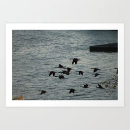 Canadian Geese Art Print