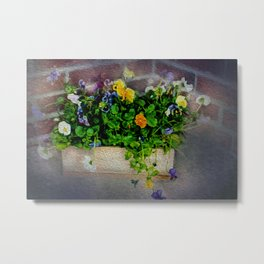 Pansies in Wood Box Metal Print