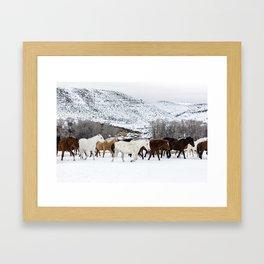 Carol Highsmith - Wild Horses Framed Art Print