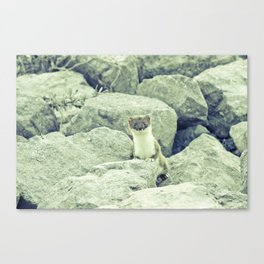 Stoat be Alarmed Canvas Print