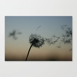 wishes on the wind Canvas Print